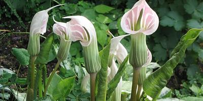 10 растений для заболоченных низин