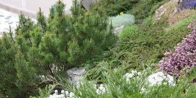 10 идеальных растений для солнечного рокария