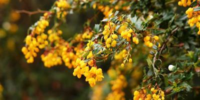 Колючие изгороди из экзотических растений