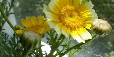 Съедобные цветы для истинных гурманов