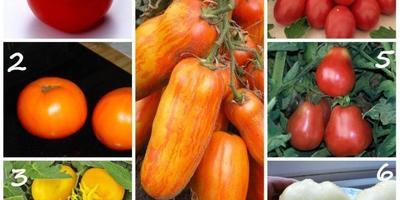 Лучшие сорта и гибриды ребристых и длинноплодных томатов