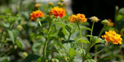 Внешность бывает обманчива: очаровательные растения с неприятным запахом