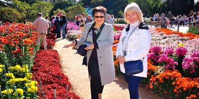 Никитские сорта: крупный успех мелкоцветковых хризантем
