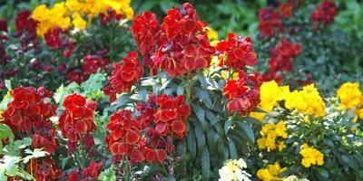 Проверены временем: какие старинные ароматные цветы сейчас снова в моде