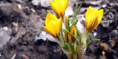 Первые цветы: вот и дождались!