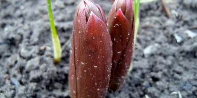 Садовые радости и сюрпризы