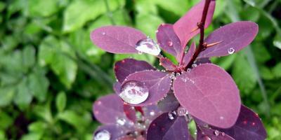 Сад после дождя