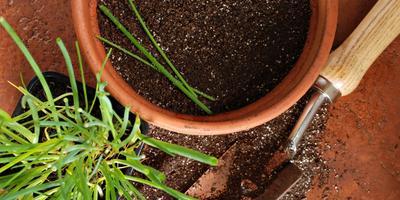 Сезонные работы в саду и огороде: четвертая неделя ноября