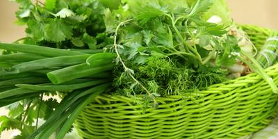 Как правильно посеять овощи под зиму