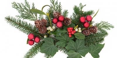 Плющ к Рождеству