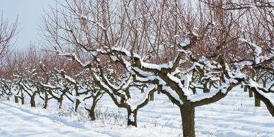 Где зимуют садовые и огородные вредители и как их обезвредить