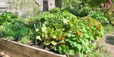 Сезонные работы в саду и огороде: третья неделя января