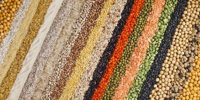 Плазменные, инкрустированные и еще 6 видов необычных семян