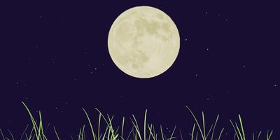 """Как """"работает"""" лунный календарь садовода"""