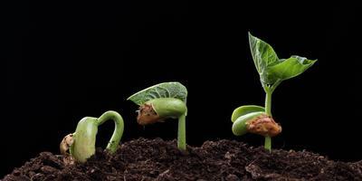Как проверить семена на всхожесть
