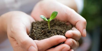 Как подготовить почву для рассады