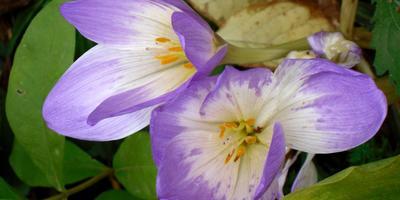 27 неприхотливых цветов для начинающих садоводов