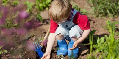 5 ошибок при посеве овощей