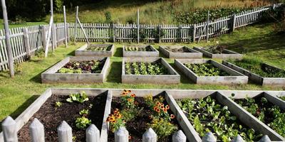 Сезонные работы в саду и огороде: четвертая неделя мая