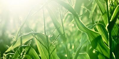 От сохи до компьютера: традиции и новации в земледелии