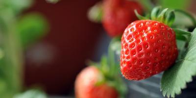 Сезонные работы в саду и огороде: конец июля - начало августа