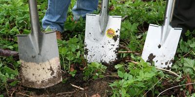 Сезонные работы в саду и огороде: третья неделя сентября