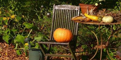 Сезонные работы в саду и огороде: третья неделя октября
