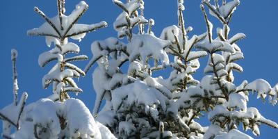 Сколько снега нам нужно?