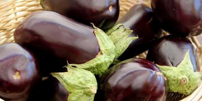 Как выбрать семена баклажанов