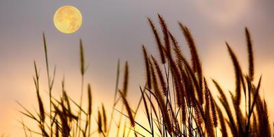 Как планировать дачные работы по движению Луны