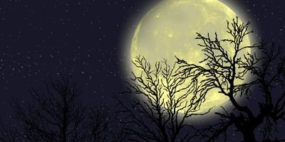 Лунный посевной календарь на сайте 7dach