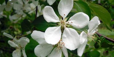 Листаем народный календарь: конец мая - начало июня