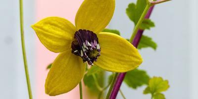 Осторожно, цветы! Опасность в красивой оболочке