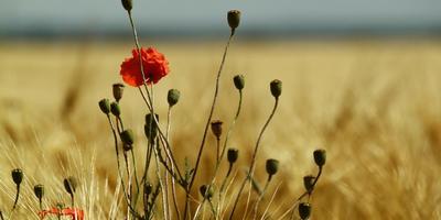 Листаем народный календарь: третья неделя июля