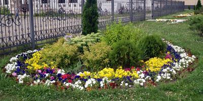 Городские цветы. Идеи с ярославских клумб
