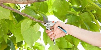 Урок 2. Выбираем инструменты для обрезки