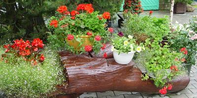 Красный цвет в саду. Главное - не переборщить