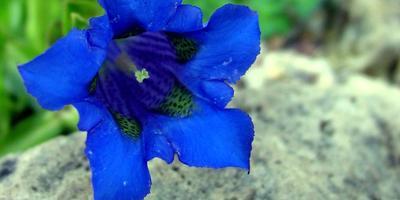 Сад в синем цвете: выбираем растения