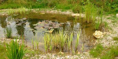 Пошаговая технология обустройства пейзажного пруда на участке