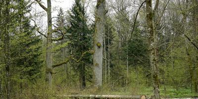Почвы Подмосковья, или Что знают дуб и сосна про ваш сад