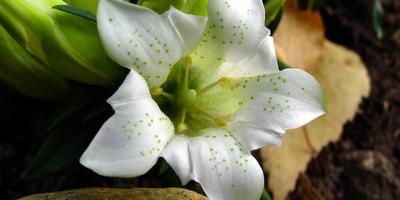 Цветы поздней осени