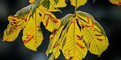 Осень. Время смотреть в корень