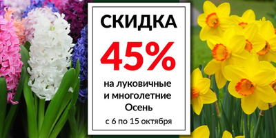 Обзор актуальных скидок в интернет-магазинах семян и посадочного материала