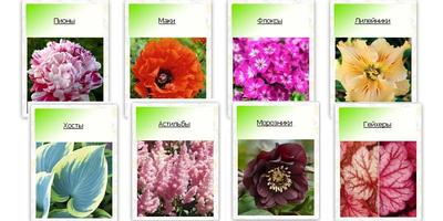 Скидки, акции и новинки в садовых интернет-магазинах на этой неделе