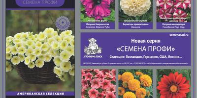 Садовые цветы: лучшие сорта от Агрофирмы Поиск