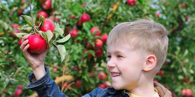 Где можно сделать выгодные покупки семян и посадочного материала на этой неделе