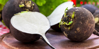 Календарь здоровья: сироп из черной редьки от кашля и бронхита
