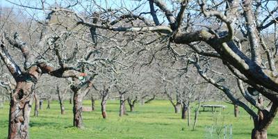 Старые яблони глазами ландшафтного дизайнера