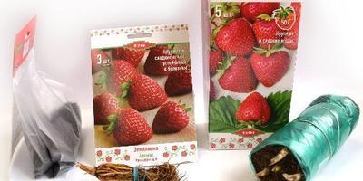 Агрофирма Поиск рекомендует: лучшие сорта садовой земляники