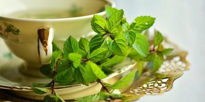 Календарь здоровья: травяной чай с мятой от простуды